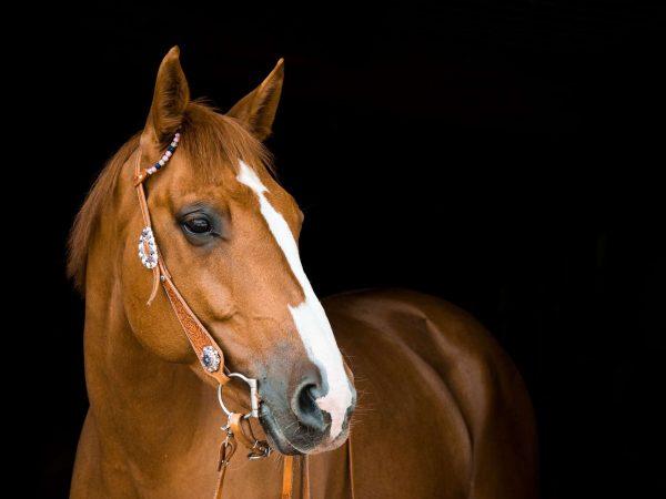 Pferdesalbe: Test & Empfehlungen (01/20)