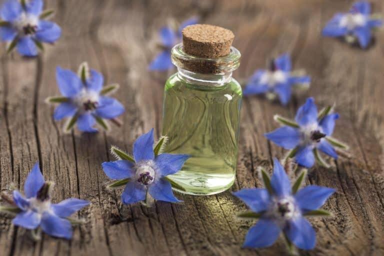Borretschöl mit Blüten