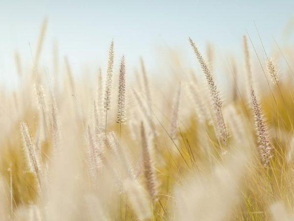 Weizenallergie: Alles, was du über die allergische Reaktion auf Weizen wissen musst
